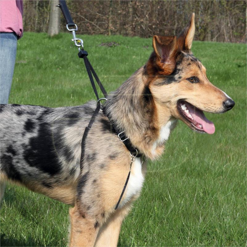Trixie Easy Walk Köpek Eğitim Tasması Medium | 89,92 TL