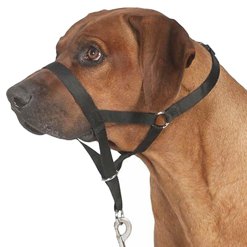 Trixie Top Trainer Köpek Eğitim Tasması Large | 140,90 TL