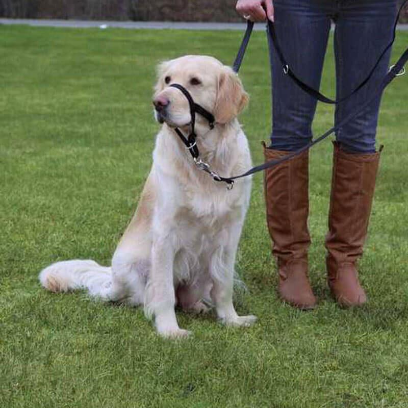 Trixie Top Trainer Köpek Eğitim Tasması Large/XLarge   112,72 TL